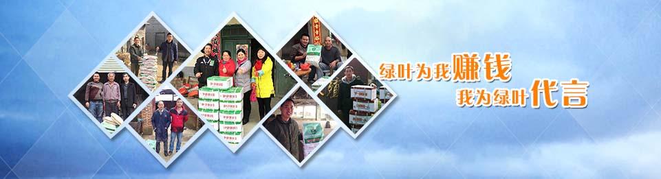 绿叶公司保健养猪技术及产品客户使用反馈。